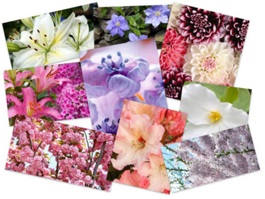 Product picture 45 Eximious Flowers HD Wallpapers